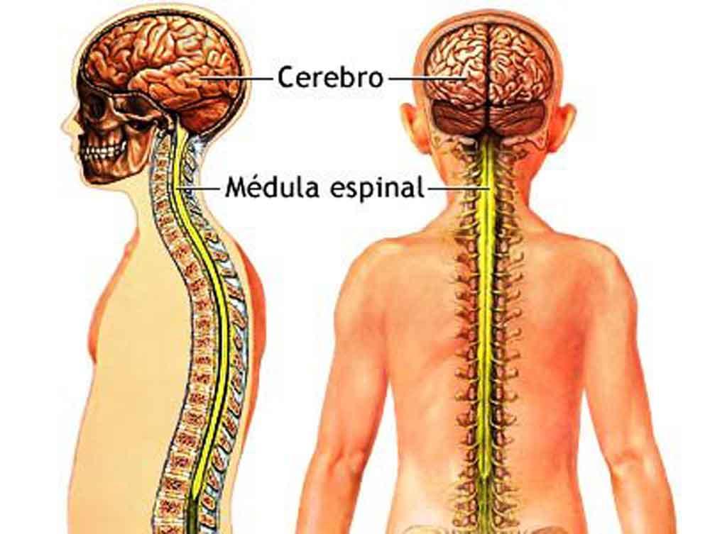 Cuidado básico de la columna vertebral - Periódico Hispano de New ...